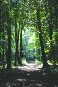 Get outside | Self-Care: Looking After Your Mind, Body & Soul | FWIO