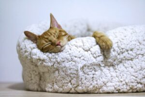 Get some rest | Self-Care: Looking After Your Mind, Body & Soul | FWIO