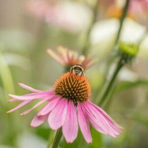 Growing Healing Plants   fwio.on.ca