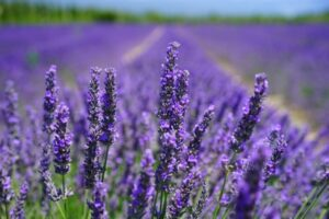 Growing Healing Plants | fwio.on.ca