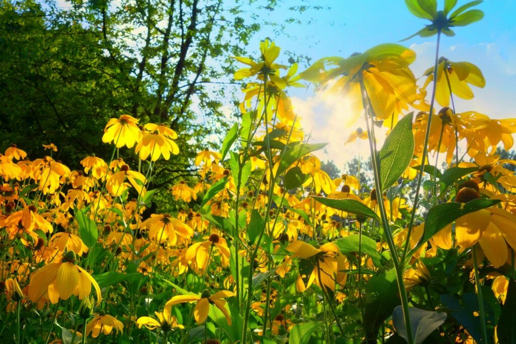 Gardening with Native Plants | fwio.on.ca