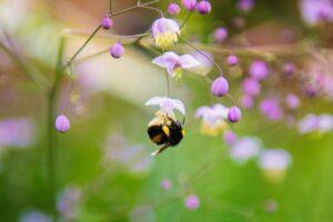 How to Create a Pollinator-Friendly Garden   fwio.on.ca