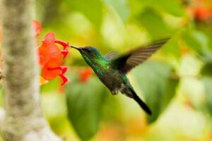 How to Create a Pollinator-Friendly Garden | fwio.on.ca