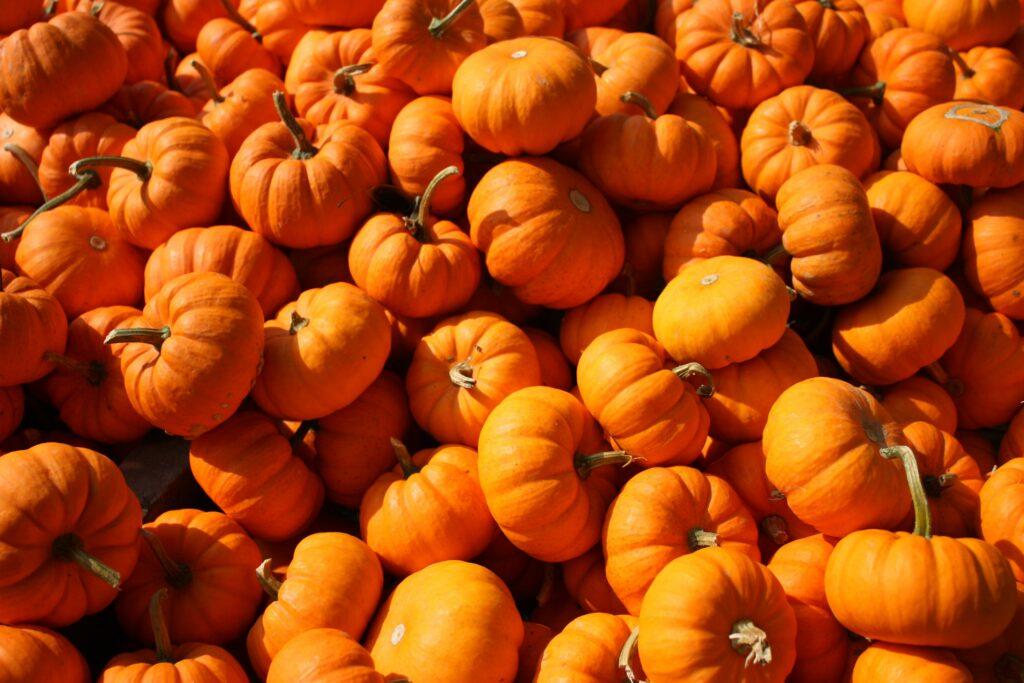 tiny pumpkins   FWIO   fwio.on.ca